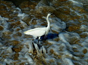 Anna Duyunova Art Photos - Fishing Egret by Anna  Duyunova