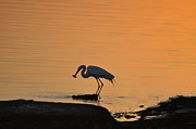 Golden Fish Art - Fishing Egret by Bill Cannon