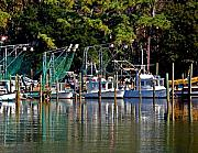 Shrimp Boat Prints - Fishing Fleet Print by Michael Thomas