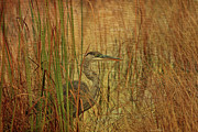 Waterfowl Mixed Media Framed Prints - Fishing In The Reeds Framed Print by Deborah Benoit