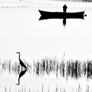 Reed Bed Prints - Fishing Print by Okan YILMAZ