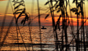 Sea Oats Prints - Fishing the coast Print by David Lee Thompson