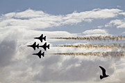 Military Base Photo Originals - Five Birds by Nicholas Evans