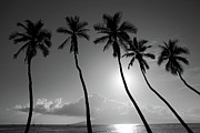 Hawaiian Islands Prints - Five coconut palms Print by Pierre Leclerc