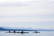 Valdes Posters - Five People Kayak In The Gulf Islands Poster by Taylor S. Kennedy