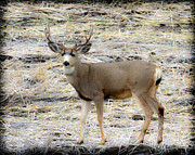 Blending Photos - Five Point Buck by Steve McKinzie