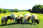 Sheep Farm Prints - Five Sheep Print by Stefan Kuhn