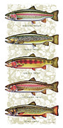 Lake Tapestries Textiles Framed Prints - Five Trout Panel Framed Print by JQ Licensing
