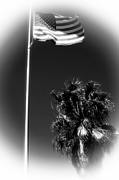 The White Stripes Photos - Flag and the Palm by John Rizzuto