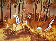 Whitetail Deer Originals - Flagging Deer by Debbie LaFrance
