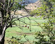 Montana Landscape Photos - Flagging Whitetail Deer by Douglas Wilks