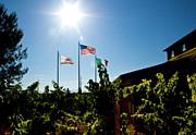 Terry Thomas - Flags at a vineyard