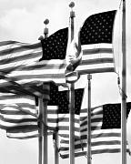 United States Of America Originals - Flags by John Gusky