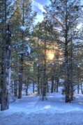 Flagstaff Sunset Print by Kelly Wade