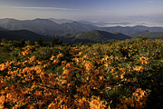 Clouds Photographs Posters - Flame Azalea and the Blue Ridge Mountains Poster by Rob Travis