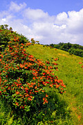 Gregory Prints - Flame Azalea atop Gregory Bald Print by Alan Lenk