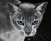 Animal Drawings Prints - Flame Point Siemese Cat Print by Sheryl Unwin
