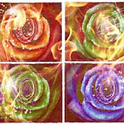 Mauve Photos - Flaming Rose by Mandi Ward
