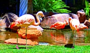 Flamingos Art - Flamingo 2 by Randall Weidner