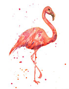 Flamingo Paintings - Flamingo Facing Right by Alison Fennell