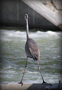 River View Pyrography Metal Prints - Flamingo In Strange Pose Metal Print by Radoslav Nedelchev