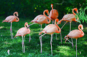 Layer Prints - Flamingo Print by Paul Ward