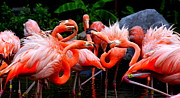 Flamingo Prints - Flamingo Wars Print by Kenneth Mucke
