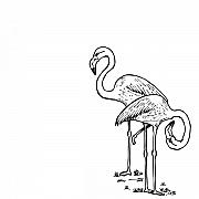 Flamingo Drawings Prints - Flamingoes - Black and White Print by Karl Addison