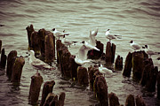 Flying Seagulls Originals - Flap your wings and fly away by Nelieta Mishchenko