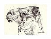Camel Drawings - Fleas of a 1000 Camels by Deborah Wetschensky