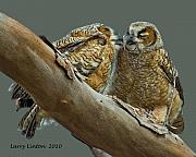 Great-horned Owls Framed Prints - Fledgling Great Horned Owls Framed Print by Larry Linton