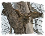 Horned Digital Art Acrylic Prints - Fledgling Acrylic Print by Larry Linton