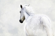Listen Prints - Fleeing Grey Horse Print by Ethiriel  Photography