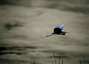 Gray Heron Photos - Fleeing the Storm by DigiArt Diaries by Vicky Browning
