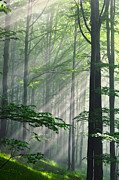 Green Forest Photos - Fleeting Beams by Evgeni Dinev