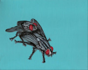 Flies Framed Prints - Flies Framed Print by Jude Labuszewski