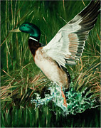 Waterfowl Paintings - Flight by Douglas Fincham
