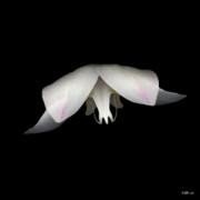 Heather Kirk - Flight