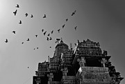 Black And White Birds Posters - Flight Of Birds Above Jadgish Temple Poster by Prashanth Naik
