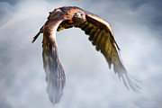 Raptor Digital Art - Flight of Fancy by Julie L Hoddinott