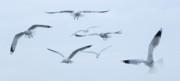 Steve Rudolph - Flight