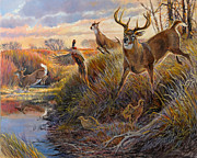 Whitetail Posters - Flight Poster by Steve Spencer