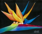 Bird Of Paradise Drawings - Flight to Paradise by Laura Bell