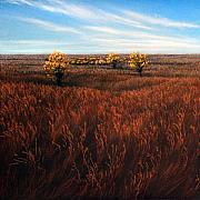 Field. Cloud Pastels - Flint Hills Prairie by Lisa Higby LeFevre