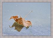 Deborah Benoit - Floating Down Lifes Path