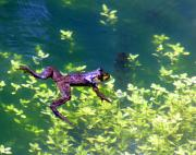 Amphibians Photos - Floating Frog by Nick Gustafson