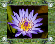 Flower Photos Framed Prints - Floating Lilac Framed Print by Bell And Todd