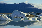 People On Ice Photos - Floatting field of Icebergs in Iceland by Sami Sarkis