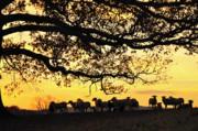 Flock At Sunrise Print by Thomas R Fletcher