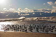 Slash Metal Prints - Flock of Birds Gathered Near the Waves Metal Print by Janet Lindsay